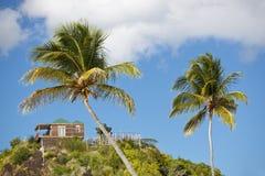 Palmiers de noix de coco sur le ciel bleu, Antigua Images stock