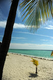 Palmiers de noix de coco à la plage tropicale vide Image stock