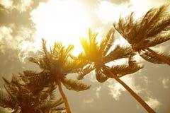 Palmiers de noix de coco photos libres de droits