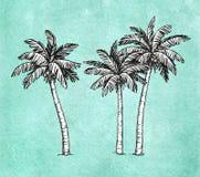 Palmiers de noix de coco Image stock