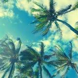 Palmiers de noix de coco avec l'effet d'instagram Photographie stock