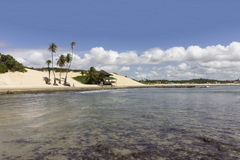 Palmiers de noix de coco - plage et dunes de Genipabu dans natal, RN, Brésil Photos stock