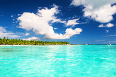 Palmiers de noix de coco sur la plage sablonneuse blanche en île de Saona, Dominique Photo stock