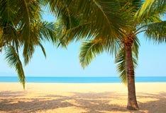 palmiers de plage Images libres de droits