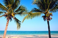 palmiers de plage Photographie stock