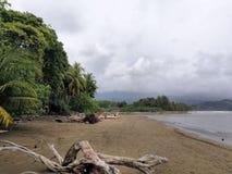 Palmiers de plage au Costa Rica images libres de droits