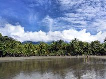 Palmiers de plage au Costa Rica image stock