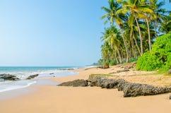 Palmiers de plage sablonneuse de paradis, Sri Lanka, Asie Image stock