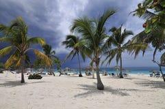 palmiers de plage tropicaux Image stock