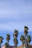 Palmiers de soufflement de vent Photographie stock libre de droits