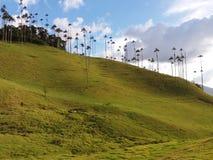 Palmiers de vallée de Corcora Photographie stock libre de droits