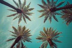 Palmiers de vintage avec la fusée de lentille Images stock