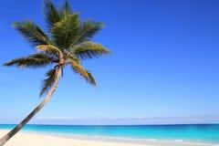 Palmiers des Caraïbes de noix de coco en mer de tuquoise Photos stock