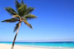 Palmiers des Caraïbes de noix de coco en mer de tuquoise Photographie stock libre de droits