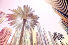Palmiers devant les gratte-ciel modernes à Dubaï Image stock