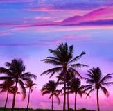 Palmiers du sud la Floride de coucher du soleil de plage de Miami Beach Image stock