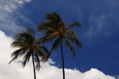 Palmiers en Hawaï Photographie stock libre de droits