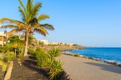 Palmiers et bâtiments d'hôtel le long de promenade côtière Images libres de droits