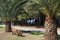 Palmiers et banc Images stock