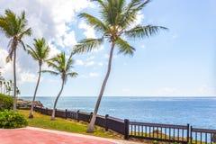 Palmiers et ciel Image stock