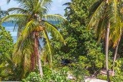 Palmiers et ciel Images libres de droits