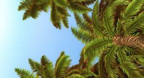 Palmiers et ciel bleu illustration libre de droits