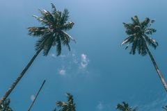 Palmiers et ciel bleu image libre de droits
