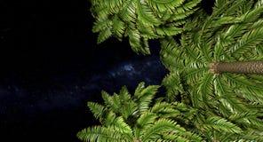 Palmiers et ciel nocturne illustration de vecteur