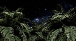 Palmiers et ciel nocturne illustration stock