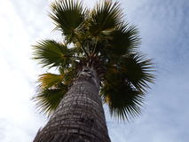 Palmiers et cieux nuageux Photos stock