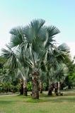 Palmiers et cordon d'herbe Image libre de droits