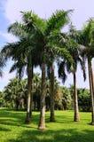 Palmiers et cordon d'herbe dans l'éclat du soleil Image libre de droits