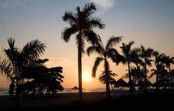 Palmiers et coucher du soleil Images libres de droits