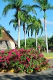 Palmiers et fleurs Images libres de droits