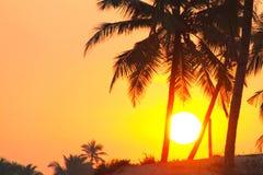 Palmiers et grand soleil Photos stock