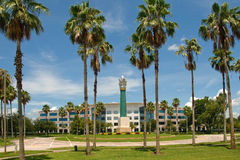 Palmiers et immeuble de bureaux Photo libre de droits
