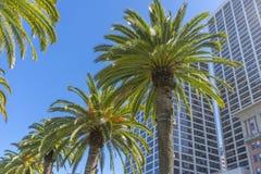 Palmiers et immeubles de bureaux à San Francisco image stock