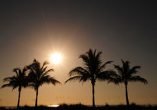 Palmiers et lever de soleil images stock