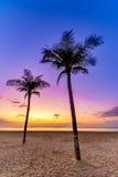 Palmiers et lever de soleil Photo stock