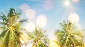 Palmiers et lumière du soleil Image libre de droits