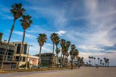 Palmiers et maisons le long de la plage, en plage de Venise Image stock