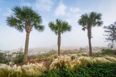Palmiers et marécage le long du tonnelier River au parc de bord de mer commémoratif dans le bâti agréable, Charleston, la Carolin photographie stock libre de droits