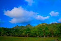 Palmiers et montagnes photographie stock