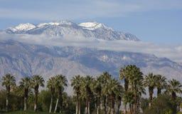 Palmiers et montagnes Photographie stock libre de droits