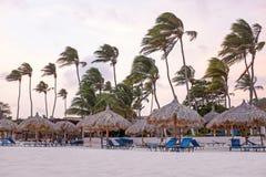 Palmiers et parapluies de plage de ondulation au coucher du soleil sur la plage dessus Photo stock