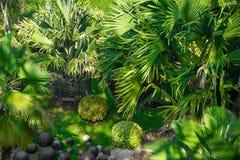 Palmiers et pierre verts en nature photo stock