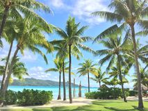 Palmiers et plage Photos stock