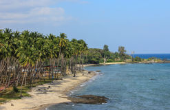 Palmiers et plage Photos libres de droits