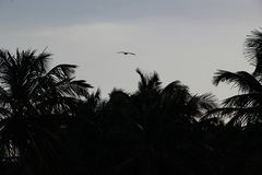 Palmiers et plage sablonneuse blanche au coucher du soleil dans Caribbeans illustration libre de droits