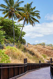 Palmiers et pont en bois Photos stock